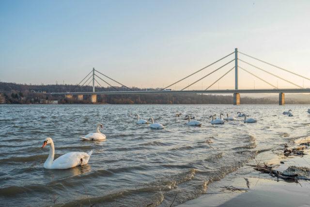 Novi Sad Danube river